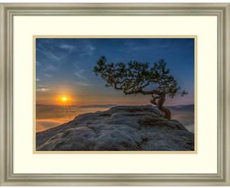 Amanti Art Old Pine Framed Art Print
