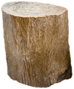 Petrified Wood Q