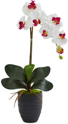 Nearly Natural Phalaenopsis Orchid Artificial Arrangement in Black Ceramic Vase