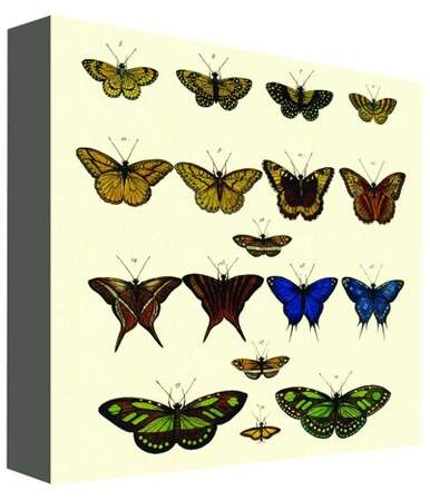 Butterfly Colors I Decorative Canvas Wall Art 16