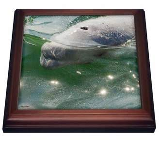 Mb 3dRose Canada, MB, Churchill. Churchill River Estuary, wild beluga whales. - Trivet with Ceramic Tile, 8 by 8-inch