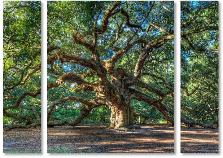 Pierre Leclerc 'Angel Oak Charleston' Multi Panel Art Set