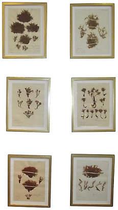 One Kings Lane Vintage 19th-C. Botanicals Prints - Set of 6 - Schorr & Dobinsky