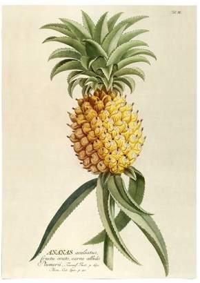 Ananas Plantae Print