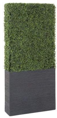 Cole & Grey Boxwood Hedge in Planter