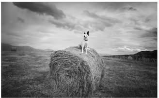 Pottery Barn Farm Dog Framed Print by Jennifer Meyers
