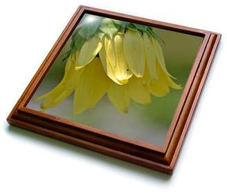 3dRose Sweet Sunflower - Summer Flowers - Photography, Trivet with Ceramic Tile, 8 by 8-inch