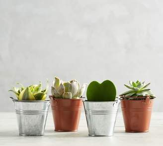 Pottery Barn Live Succulents in Metal Planters