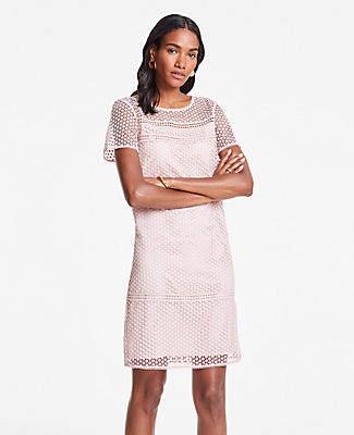 56bc9414d9 Ann Taylor Tall Lace T-Shirt Shift Dress