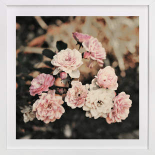 Fading Pink Roses Art Print
