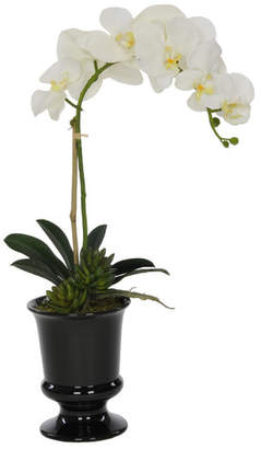 Winston Porter Artificial Phalaenopsis Orchid in Urn Flower