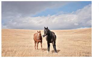 Pottery Barn Open Range Horses by Jennifer Meyers