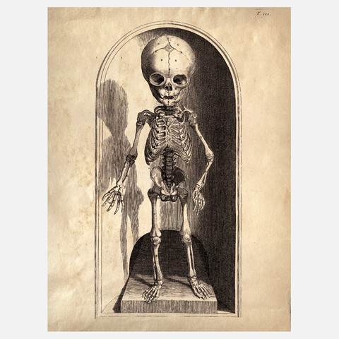 Curious Prints Anatomy Skeleton Print IV