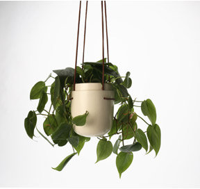 Perch Plant Pod