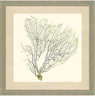 Vintage Print Gallery Green Sea Fan Coral I Framed Print