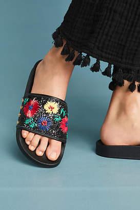 Botkier Daisy Slide Sandals