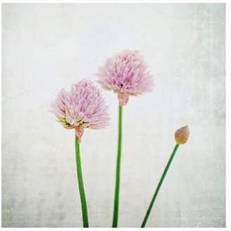 Pottery Barn Chives Framed Print by Lupen Grainne