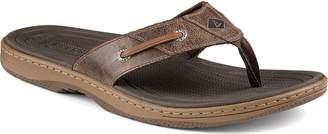 Sperry Men's Baitfish Thong Fashion Sandals