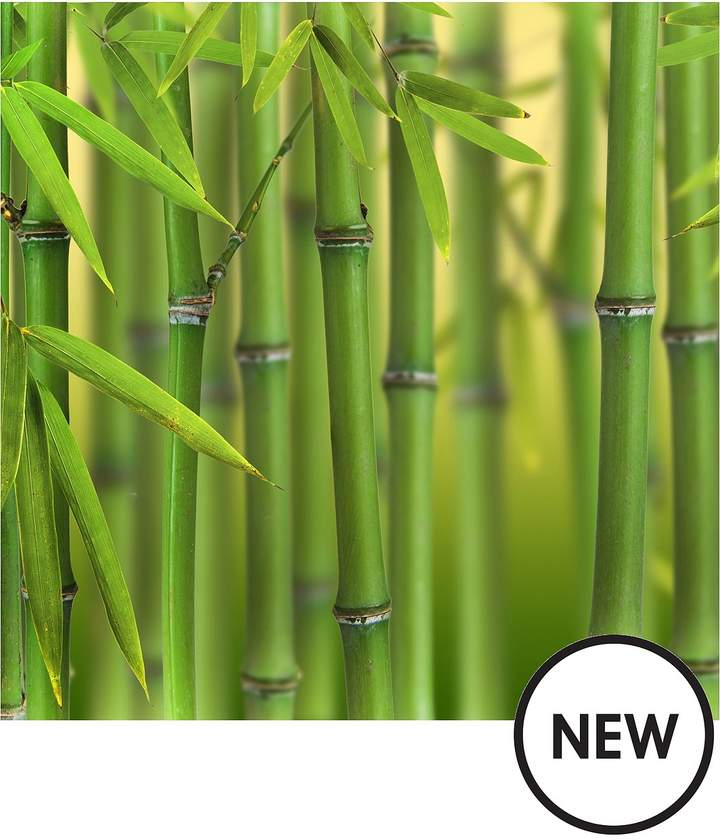 Green Bamboo Phyllostachys Bisettii 2L Pot