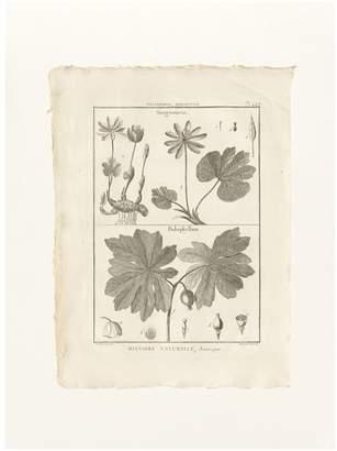 Pottery Barn Botanical Plate 449 Framed Print