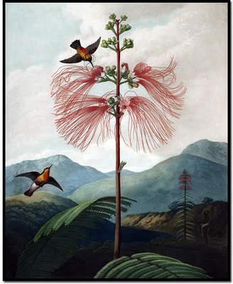 Rob-ert Museums.Co Large Flowering Sensitive Plant by Robert John Thornton Art Block