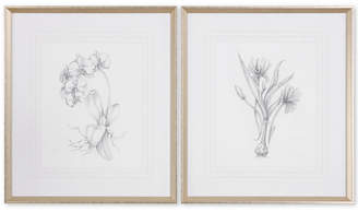 Uttermost Botanical Sketches 2-Pc. Framed Print Wall Art Set