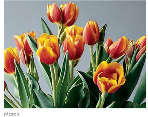 Orange Bulb Garden