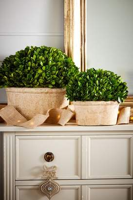 Soft Surroundings Oval Preserved Boxwood Topiary, Set of 2