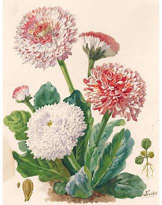 One Kings Lane Vintage Pomponette Daisy Watercolor - C. 1900 - Ursus Books and Prints Art