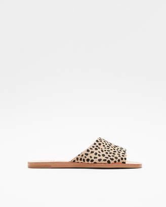 Express Dolce Vita Leopard Cato Slide Sandals