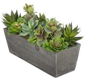 Laurèl Foundry Modern Farmhouse Artificial Succulent Garden Desk Top Plant in Decorative Vase Base