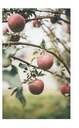 Pottery Barn Apple Harvest by Camrin Dengel