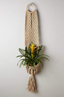 Plant Hangers Shopstyle