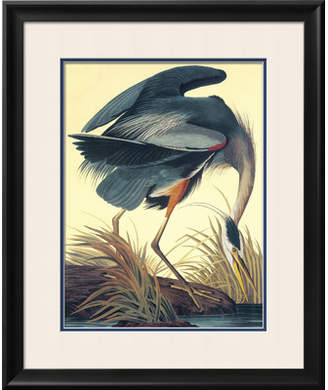 Art.com 'Great Blue Heron' by John James Audubon Framed Graphic Art