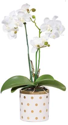 A&B Home Gold Dot Potted Orchid