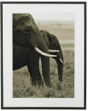 Gero Heine Elephant Photography, Two Grazing
