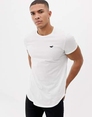 Hollister solid curved hem t-shirt seagull logo slim fit in white