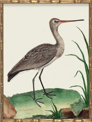 Serena & Lily Vintage Bird II in Bamboo Frame by Whalebone Creek Prints