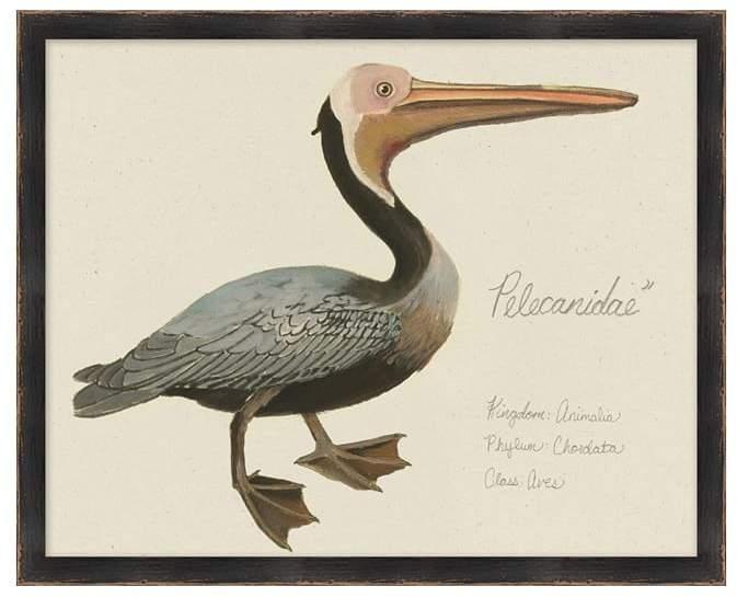Vintage Pelican Print