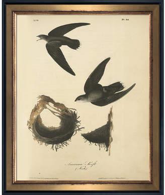 La Pastiche 'American Swift' Framed Vintage Print on Canvas
