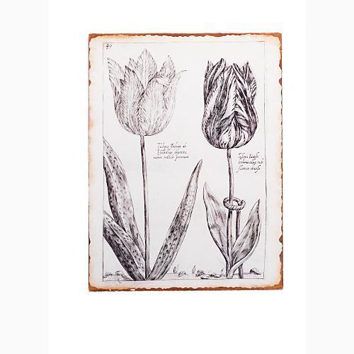 'Andrea' Tulip Tin Print
