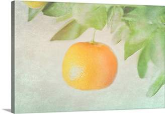 Mini A Ture Canvas On Demand Premium Thick-Wrap Canvas Wall Art Print Entitled Calamondin Miniature Orange Hanging in Tree.