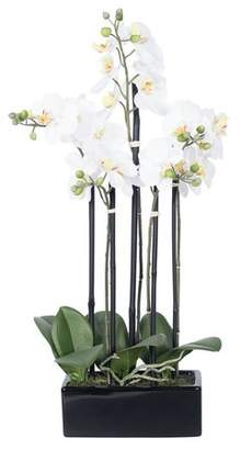 House of Hampton Potted Orchid Floral Arrangement in Planter