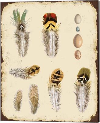 STUDY Metaverse Vintage Feather D By Jean Plout Canvas Art