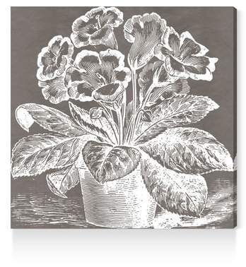 Potted Primrose Canvas Wall Art