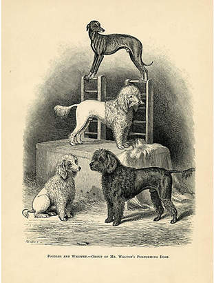 One Kings Lane Vintage Poddles and Whippet - 1880s - Prints with a Past