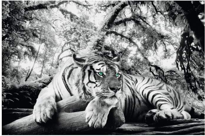 Reinders Bild Tigerblick II