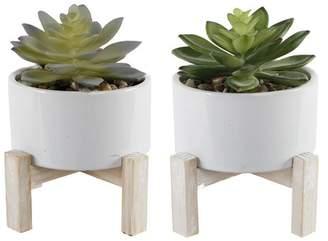Wrought Studio 2 Piece Succulent Desktop Plant in Pot Set Base