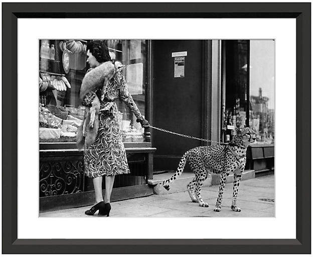 Cheetah Who Shops in London 18