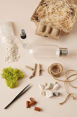 Urban Green Makers Terrarium Kit